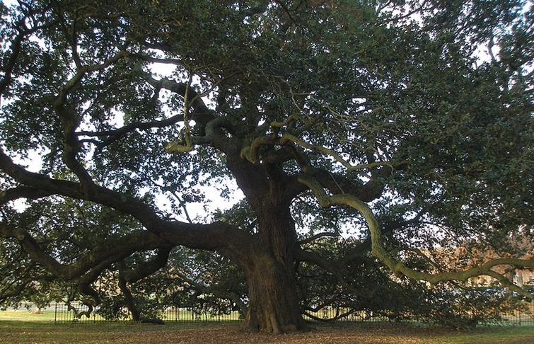 800px-Hampton_University_-_Emancipation_Oak